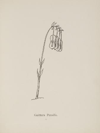 Guittara Pensilis. Illustration From Nonsense Botany by Edward Lear, Published in 1889.