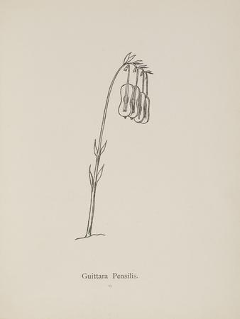 Guittara Pensilis. Illustration From Nonsense Botany by Edward Lear, Published in 1889.