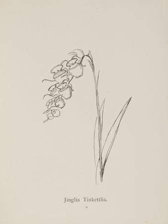 Jinglia Tinkettlia. Illustrations From Nonsense Botany, and Nonsense Alphabets by Edward Lear