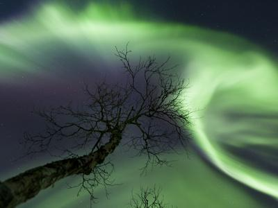 Northern Lights in the Arctic Wilderness, Nordland, Norway