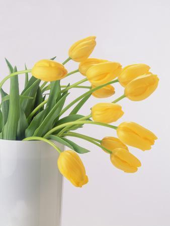 Yellow Tulips I, 1999