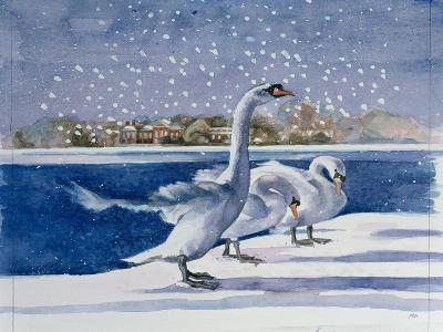 Swans at Kensington Palace