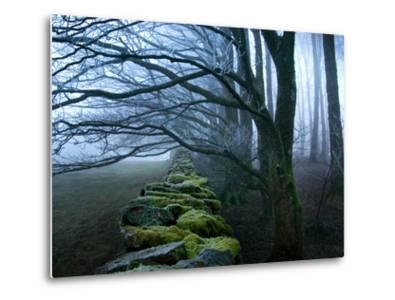 Moss Covered Stone Wall and Trees in Dense Fog