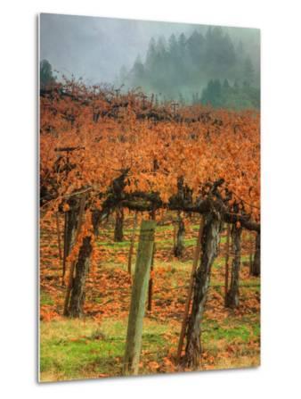 Autumn Misty Morning Vineyard, Napa