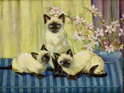 Three Siamese Cats
