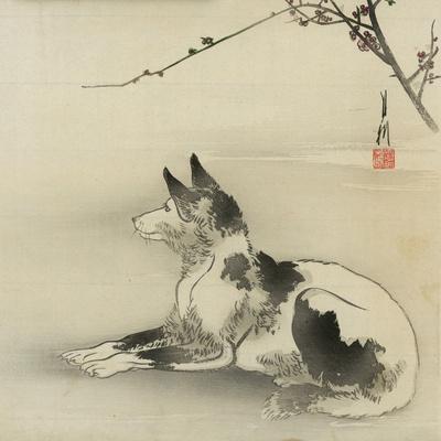 Black and White Dog, 1910