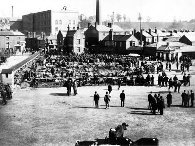 Cattle and Wholesale Market, Kidderminster, 1900
