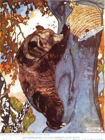 The Brown Bear (Ursus Arctos), Climbing after Honey, Illustration from 'The New Natural History',…