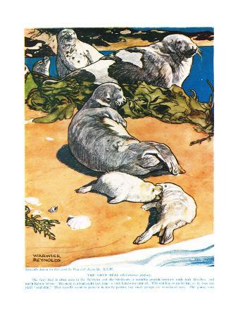 The Grey Seal, Illustration from 'The New Natural History', by John Arthur Thompson (1861-1933),…