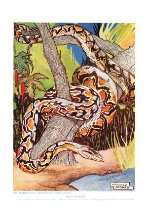Giant Python, Illustration from 'The New Natural History', by John Arthur Thompson (1861-1933),…
