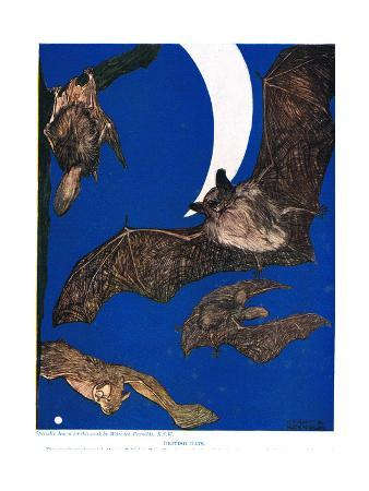 British Bats, Illustration from 'The New Natural History', by John Arthur Thompson (1861-1933),…