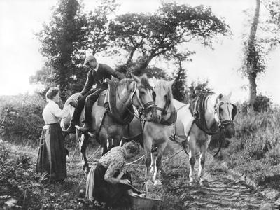 Team of Boulonnais Horses, c.1900
