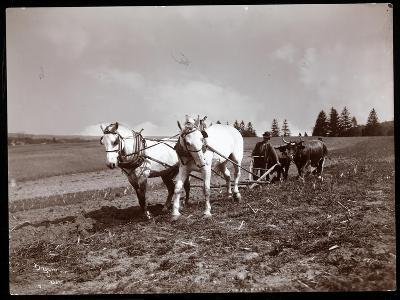 Ploughing on the Property of Alton Brooks Parker, Esopus Creek, New York, 1904
