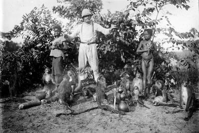 Monkeys, c.1910