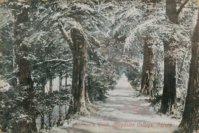 Addison's Walk, Magdalen College, Oxford. Postcard Sent in 1913