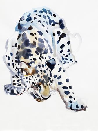 Arabian Leopard, 2008