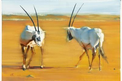 Circling Arabian Oryx, 2010