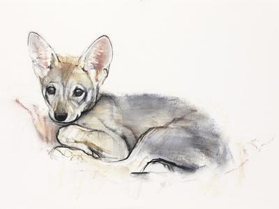 Curled Arabian Wolf Pup, 2009