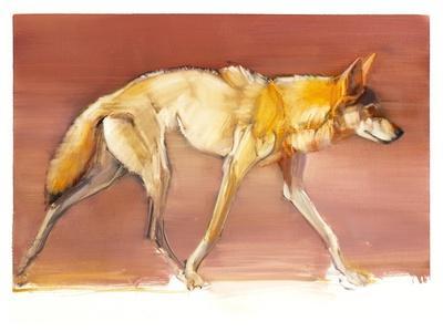 Arabian Wolf, 2010