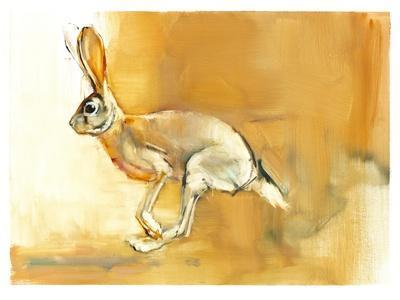 Cape Hare, 2010