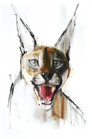 Snarl (Arabian Caracal), 2009