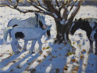 Skewbald Ponies in Winter, 2012