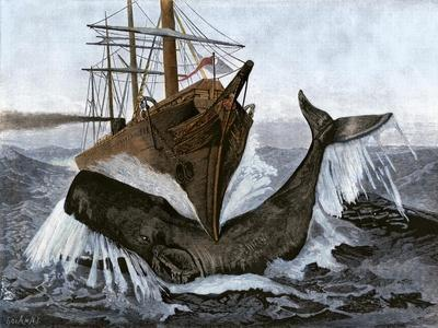"""Bow of the Ship """"Essex"""" Striking a Whale"""