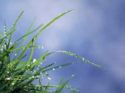 Dew Drops on Grass Blades