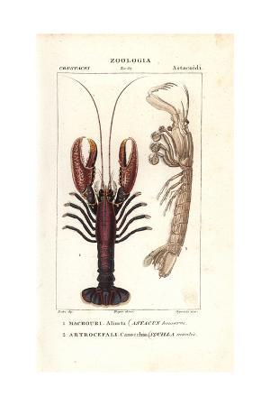 Spiny Lobster, Panulirus Homarus, And Mantis Shrimp, Squilla Mantis
