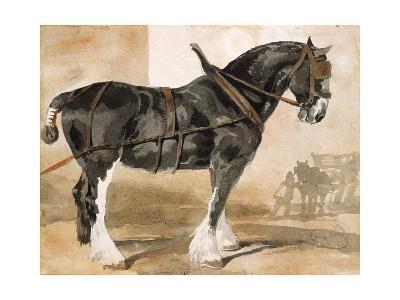 Harnessed Black Horse