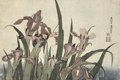 Irises and Grasshopper, Pub. by Nishimura Eijudo, C.1832