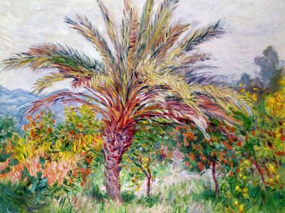 Palm Tree at Bordighera, C.1884