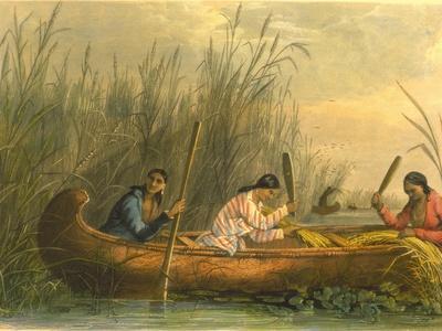 Gathering Wild Rice, 1853