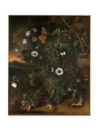 Thistles, Brambles, Poppies and Other Plants