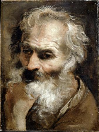 Head of an Old Man, C.1590-92