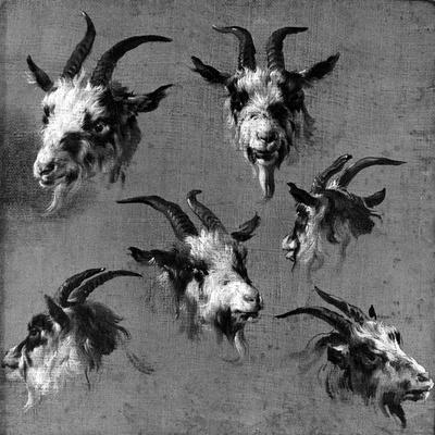 Six Studies of Goat Heads