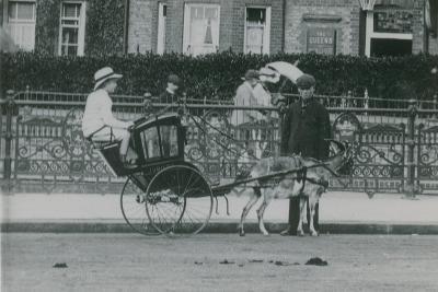 Goat-Drawn Transport