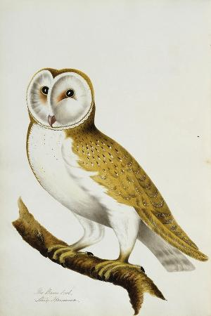 A Barn Owl, Part of an Album of Watercolours of Birds and their Eggs, C. 1800