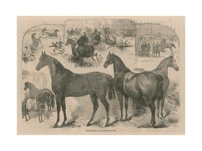The Horse Show at in the Agricultural Hall
