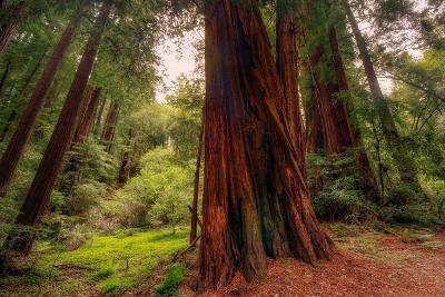 Welcome to Muir Woods 4