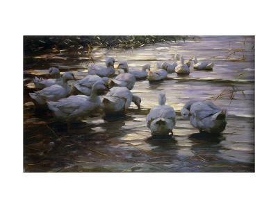 Ducks in Reflected Light by the Shore of a Lake