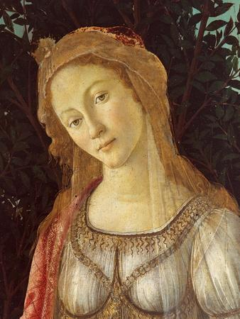 Primavera, Face of Venus