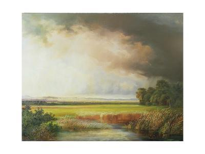 Reed Beds with Extensive Landscape