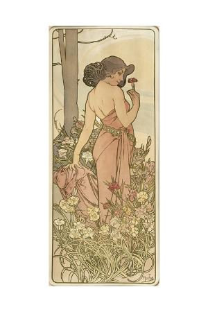 The Flowers: Carnation, 1898