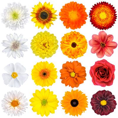 Various White, Yellow, Orange And Red Flowers Isolated On White