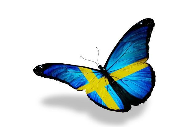 88d57c70 Swedish Flag Butterfly Flying, Isolated On White Background Art by  suns_luck at AllPosters.com