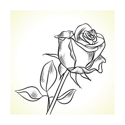 Silhouette Of The Black Rose On A White Background
