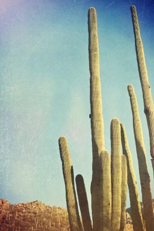 Desert Cactus With An Artistic Texture Overlay