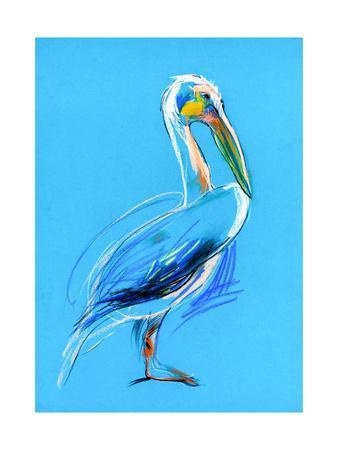 Sketch Of A Pelican