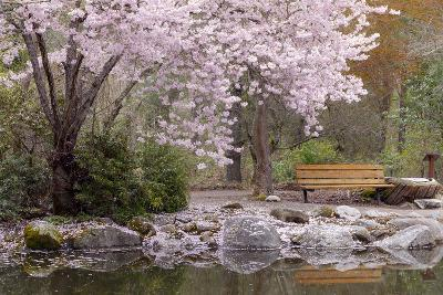 Spring Scenic in Lithia Park, Ashland, Oregon, USA
